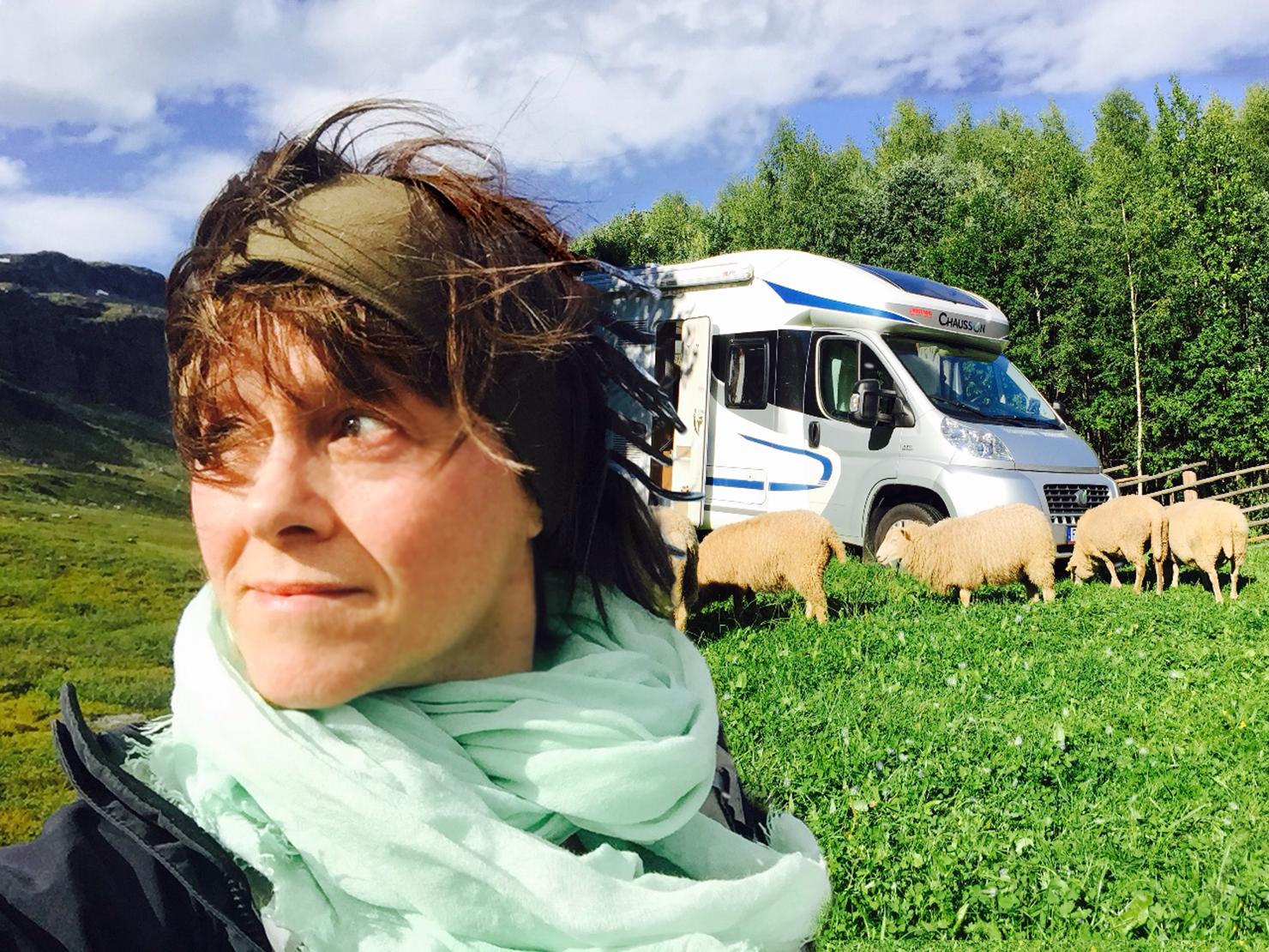 Mobil studio till fjälls med betande får runt husbilen