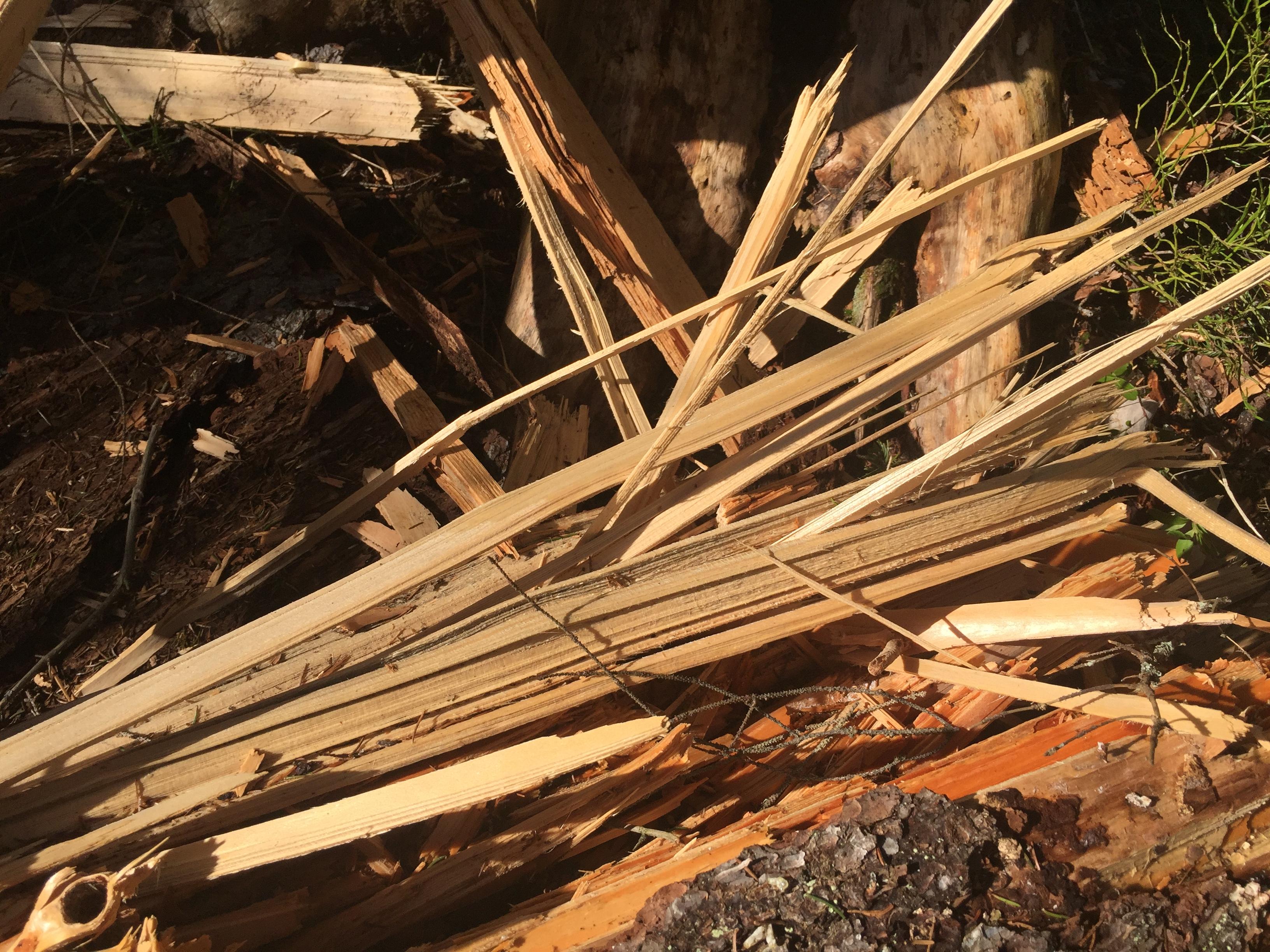 Åsknedslag träsplitter Tyresta