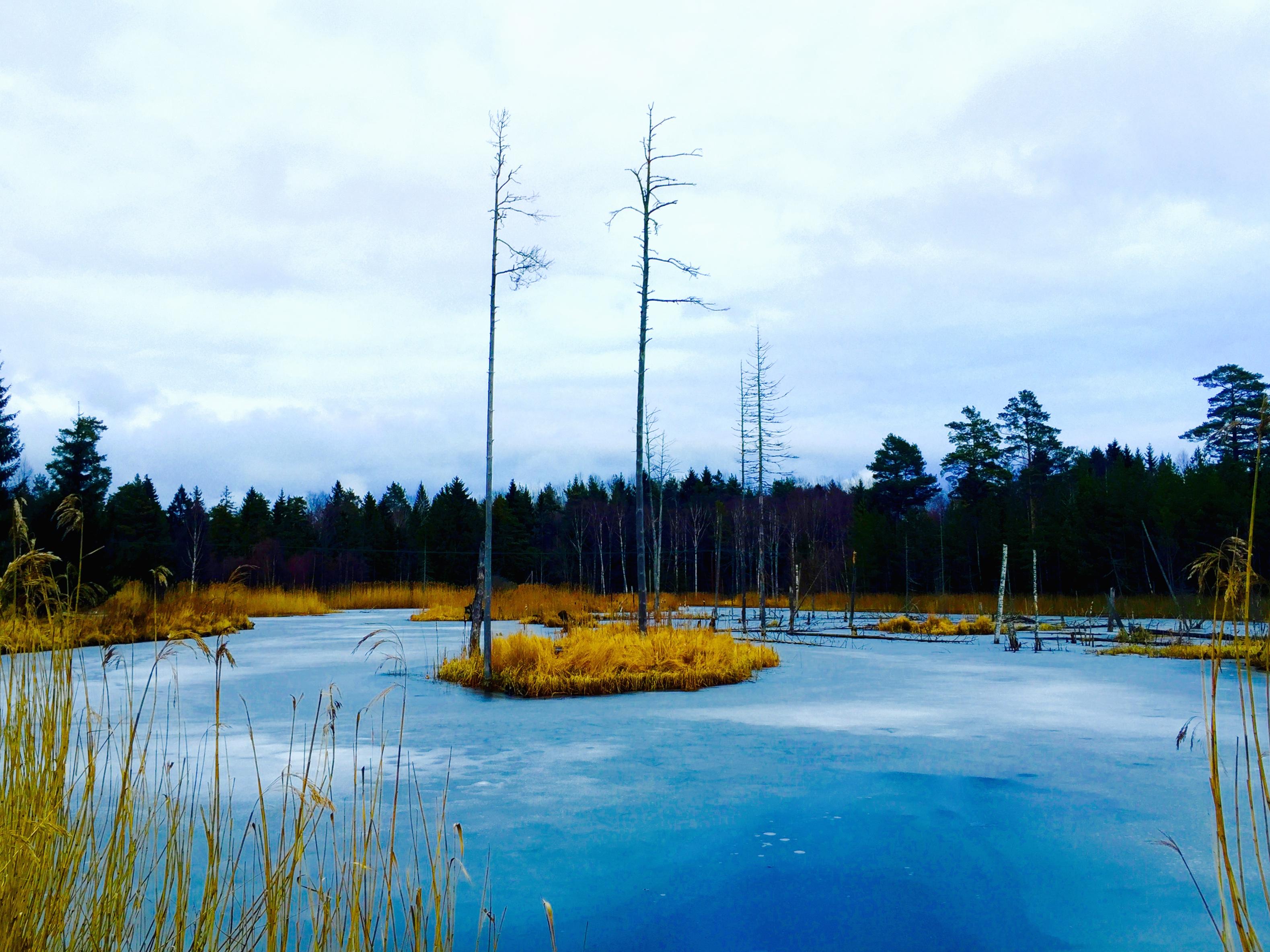 En gyllene ö i den blå ispölen.