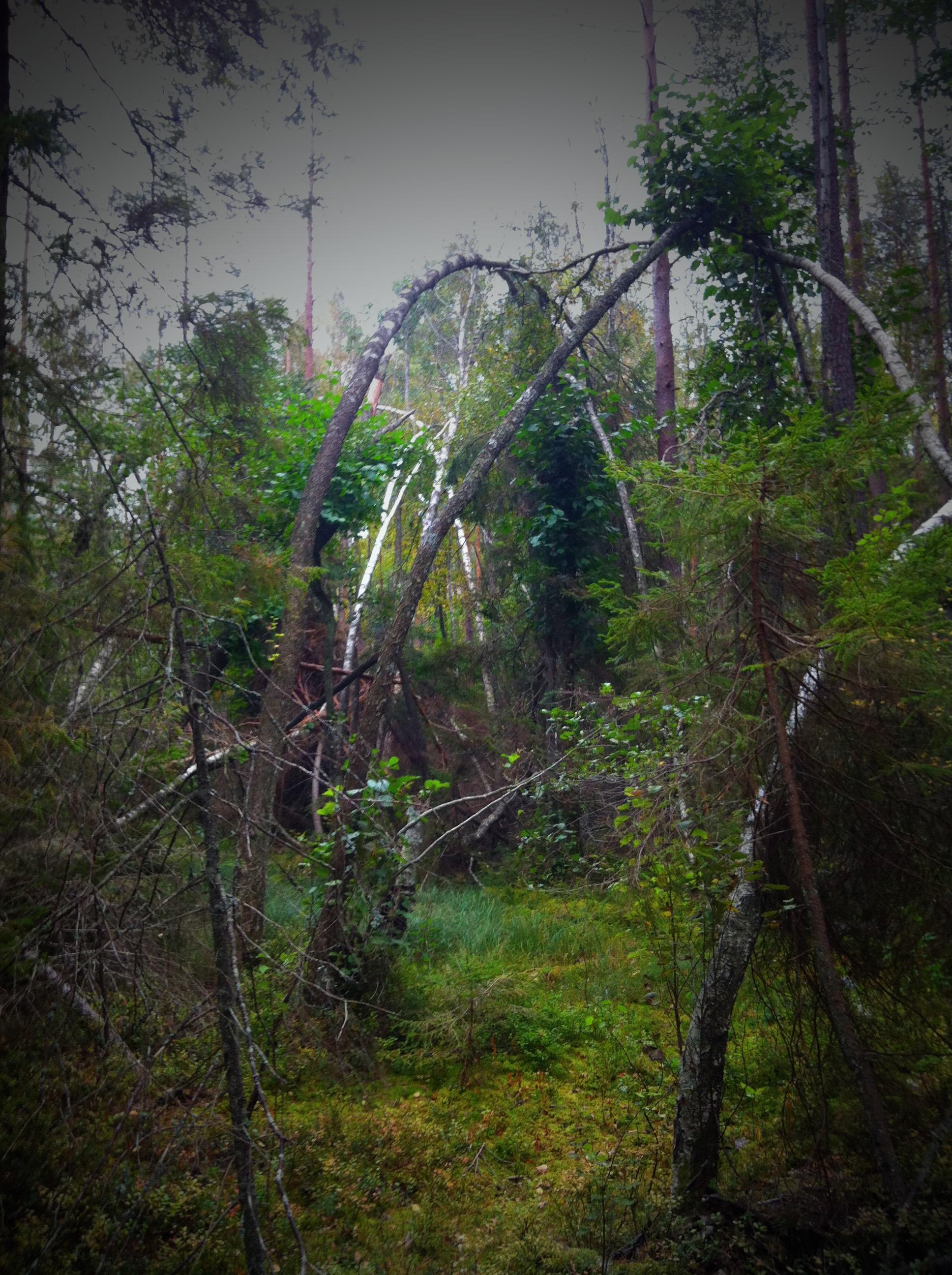 Kärr skog Tyresta