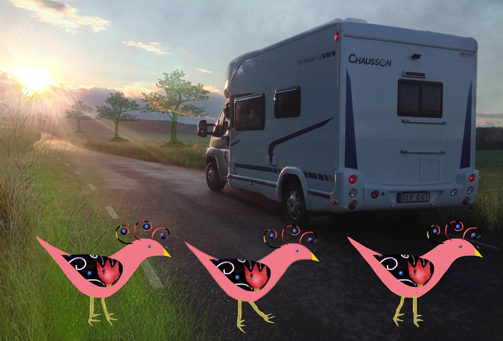 Husbil med sagofåglar bakom