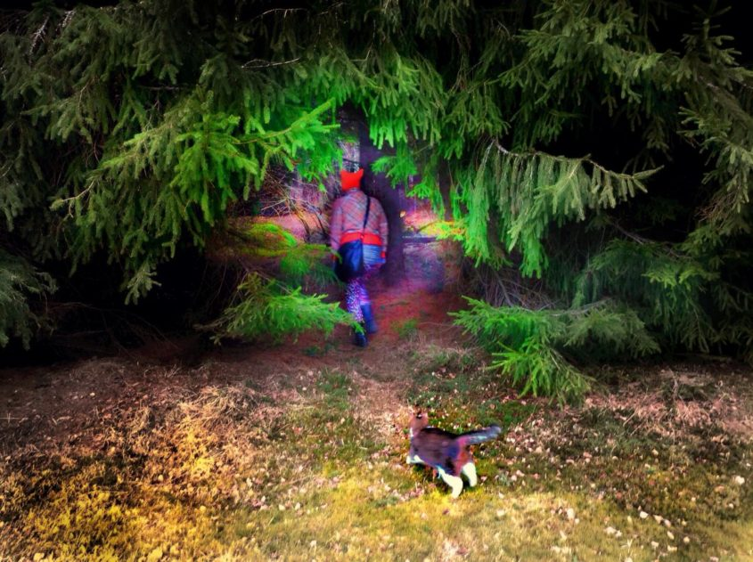 Människa smyger in bland höga granar i röd luva, katt smyger bakom.