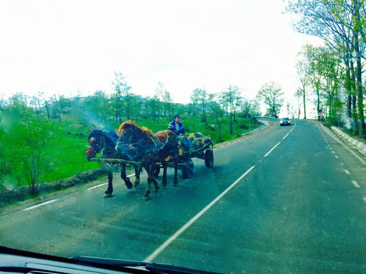 Möte med häst och vagn på väg.