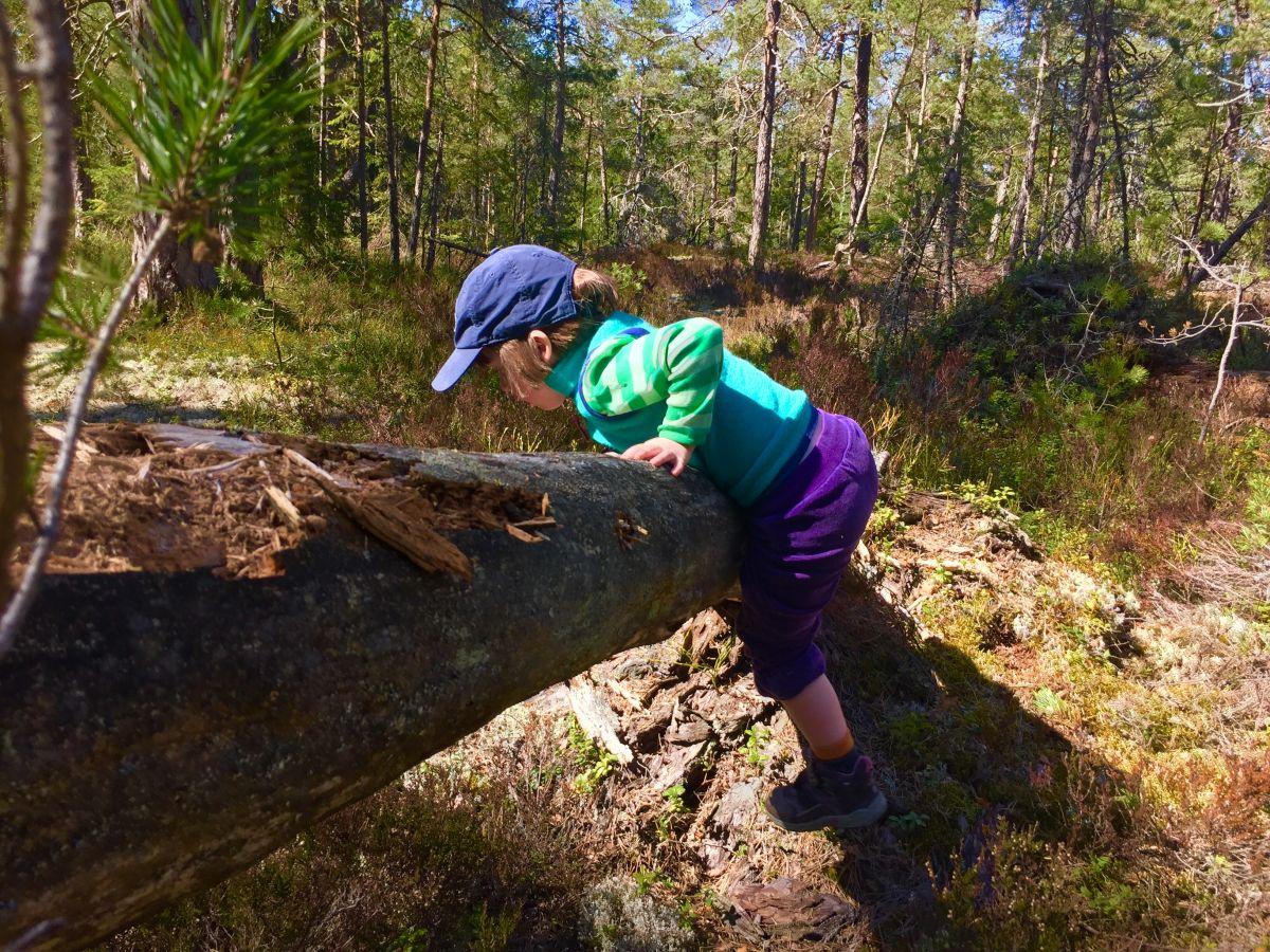 Alla barn borde få kravla runt i en skog.