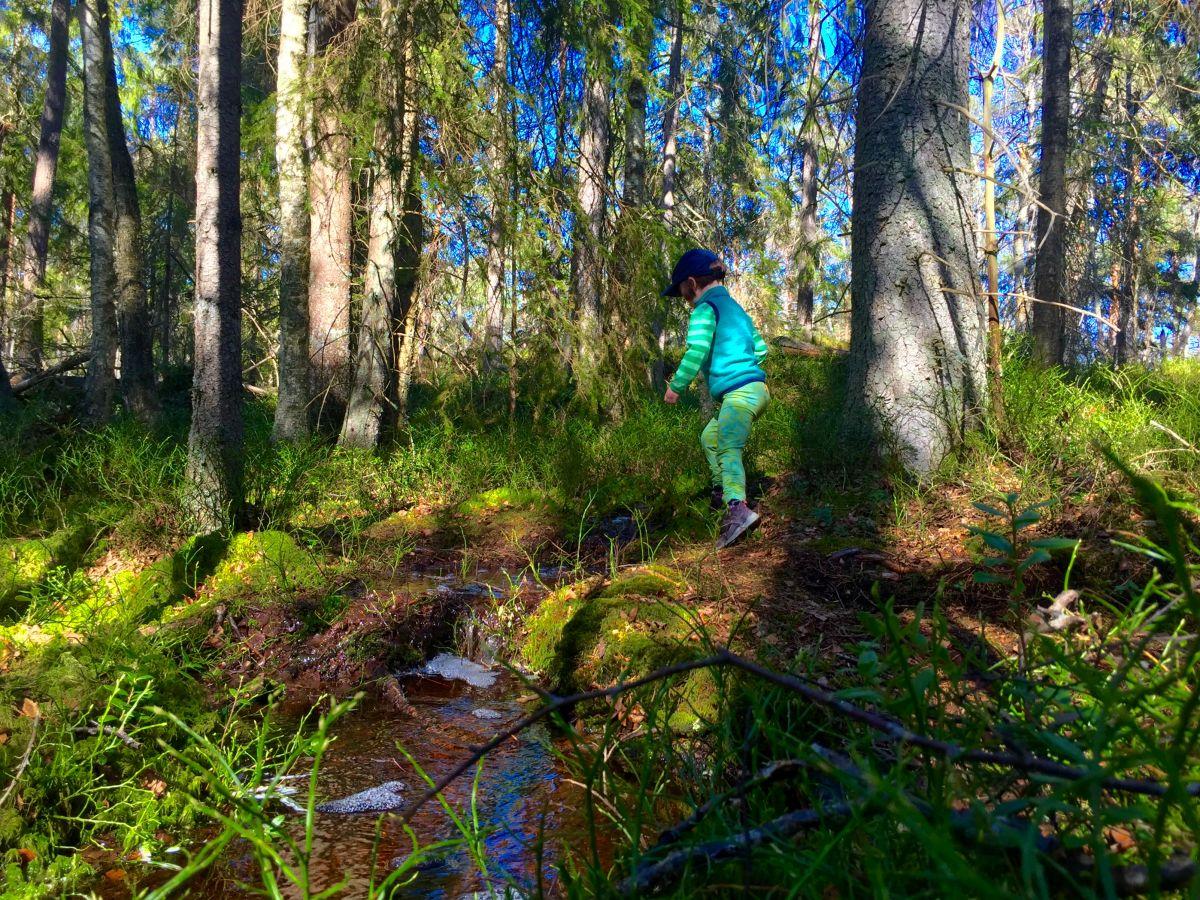 barn i skog