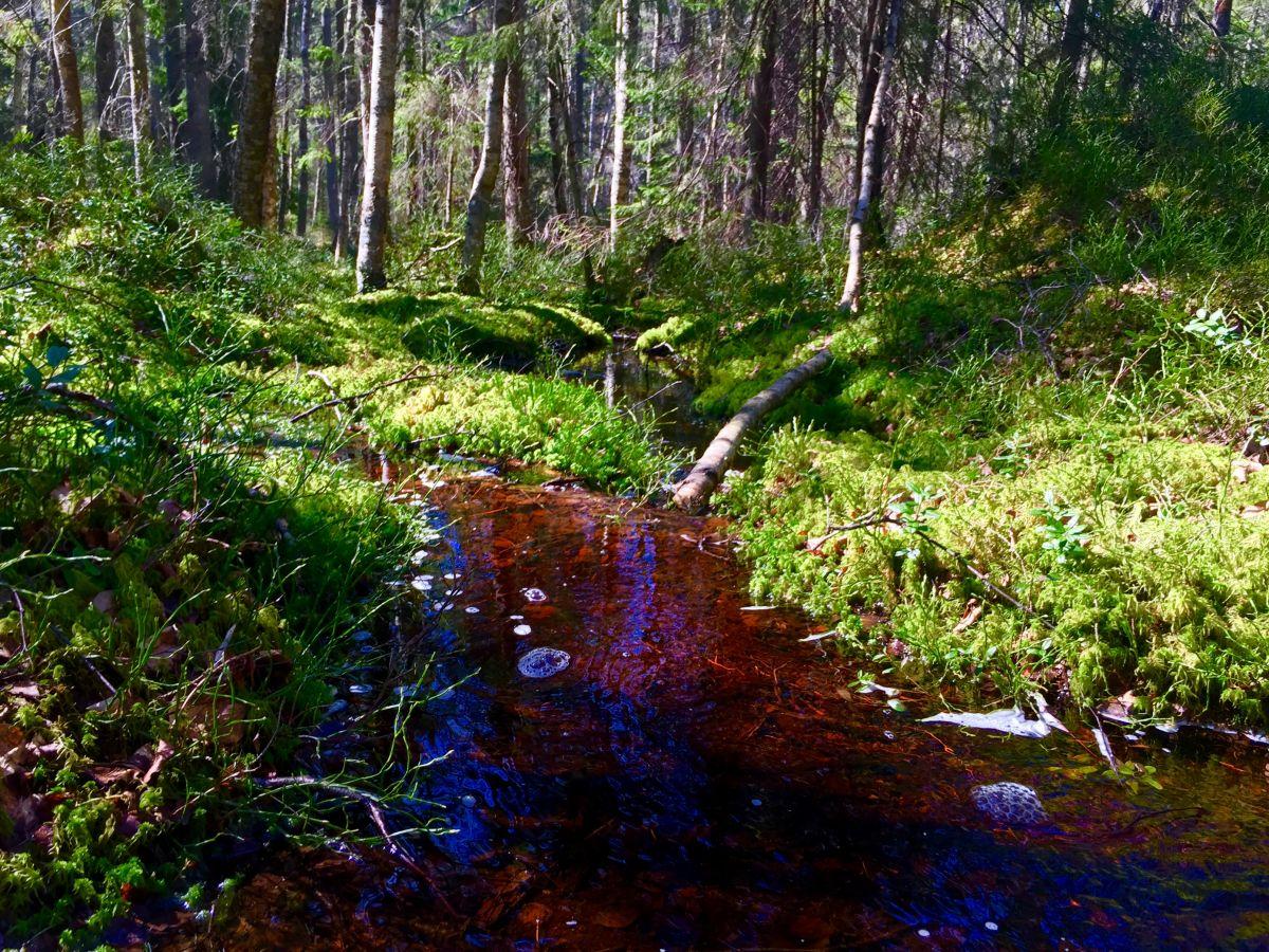 Färgerna i skogen är underbara. Mossan doftar.