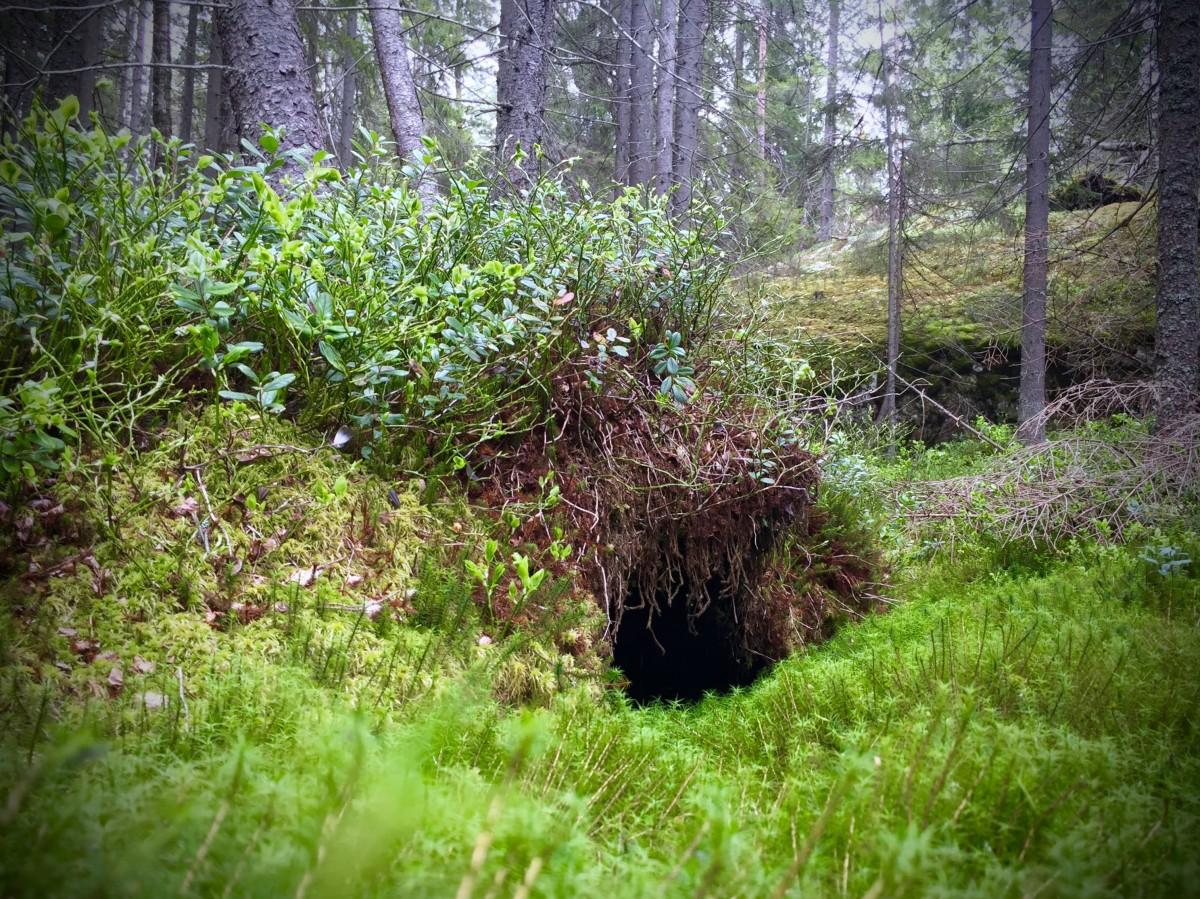 I skogen finns så många hem.