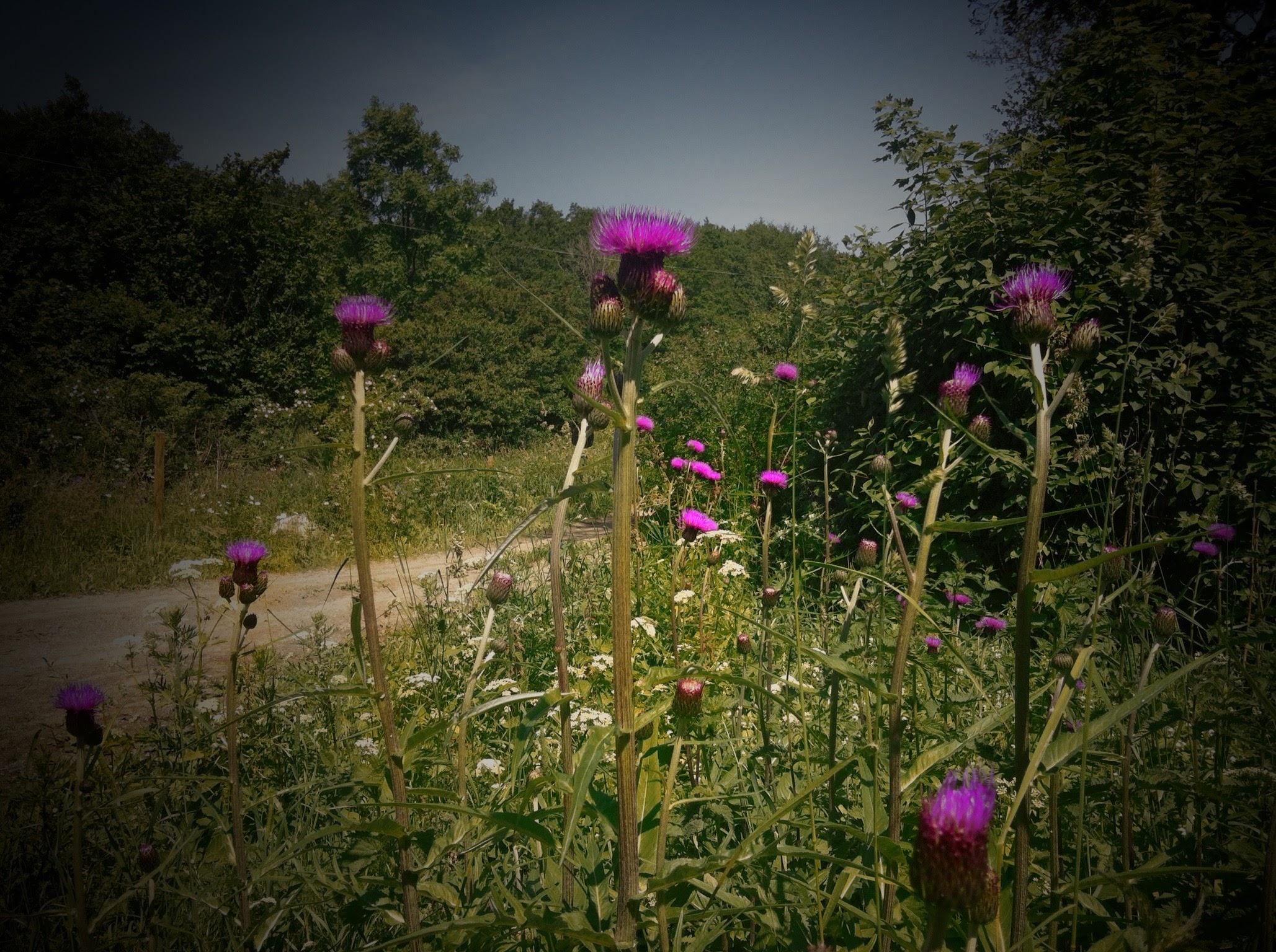 lila vackra blommor