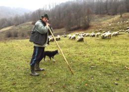 Shepherd, Ungureni, Tara Lapusului, Romania