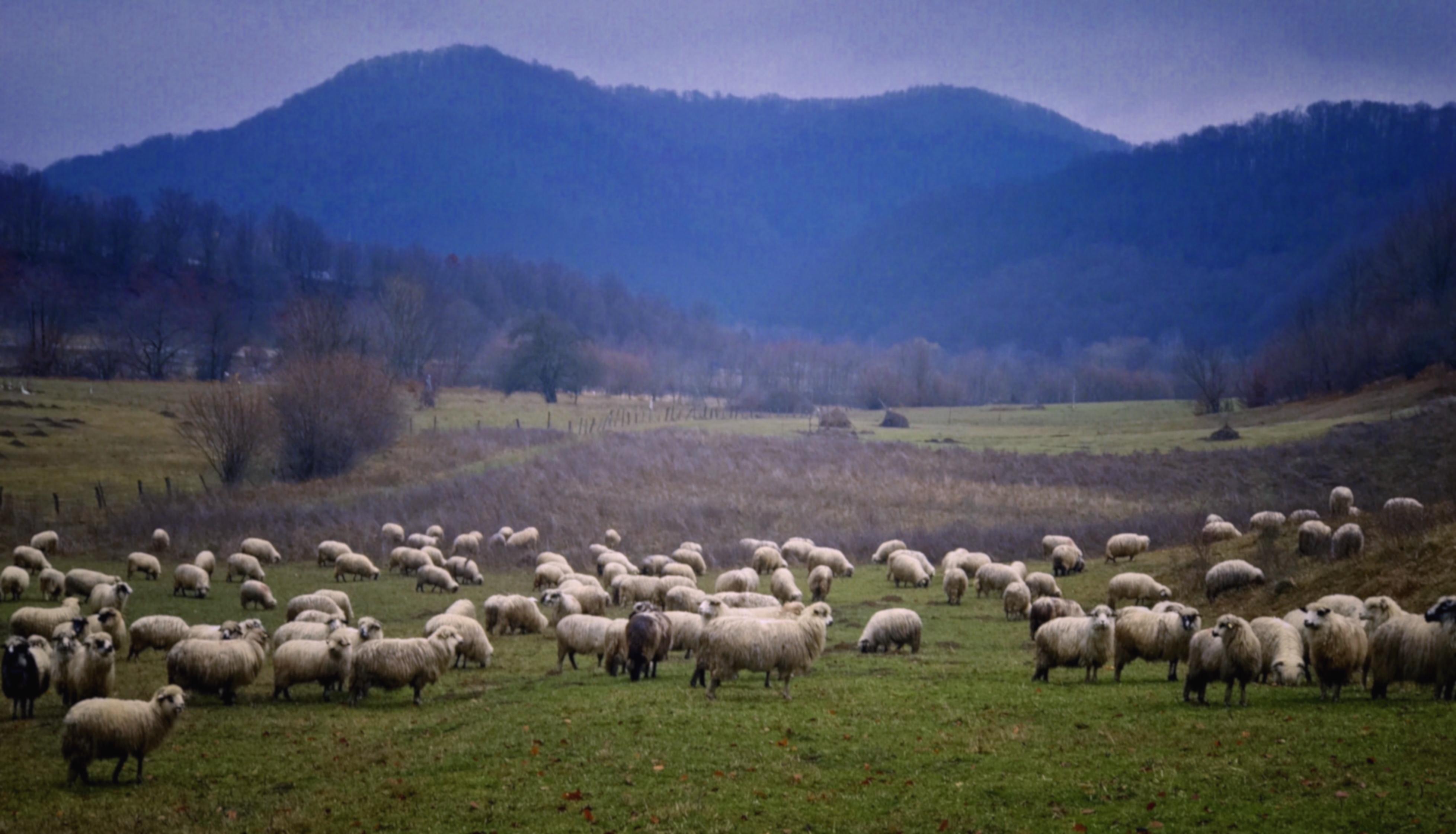 Blue hills of tara Lapusului, Romania, Maramures