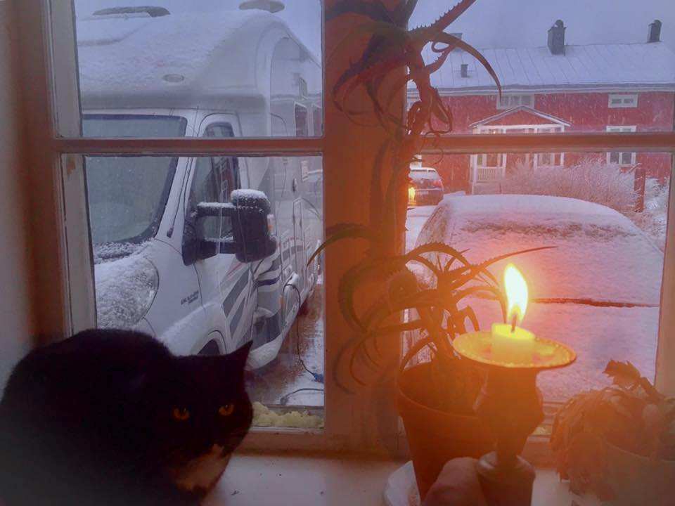 Swedish cat in the window
