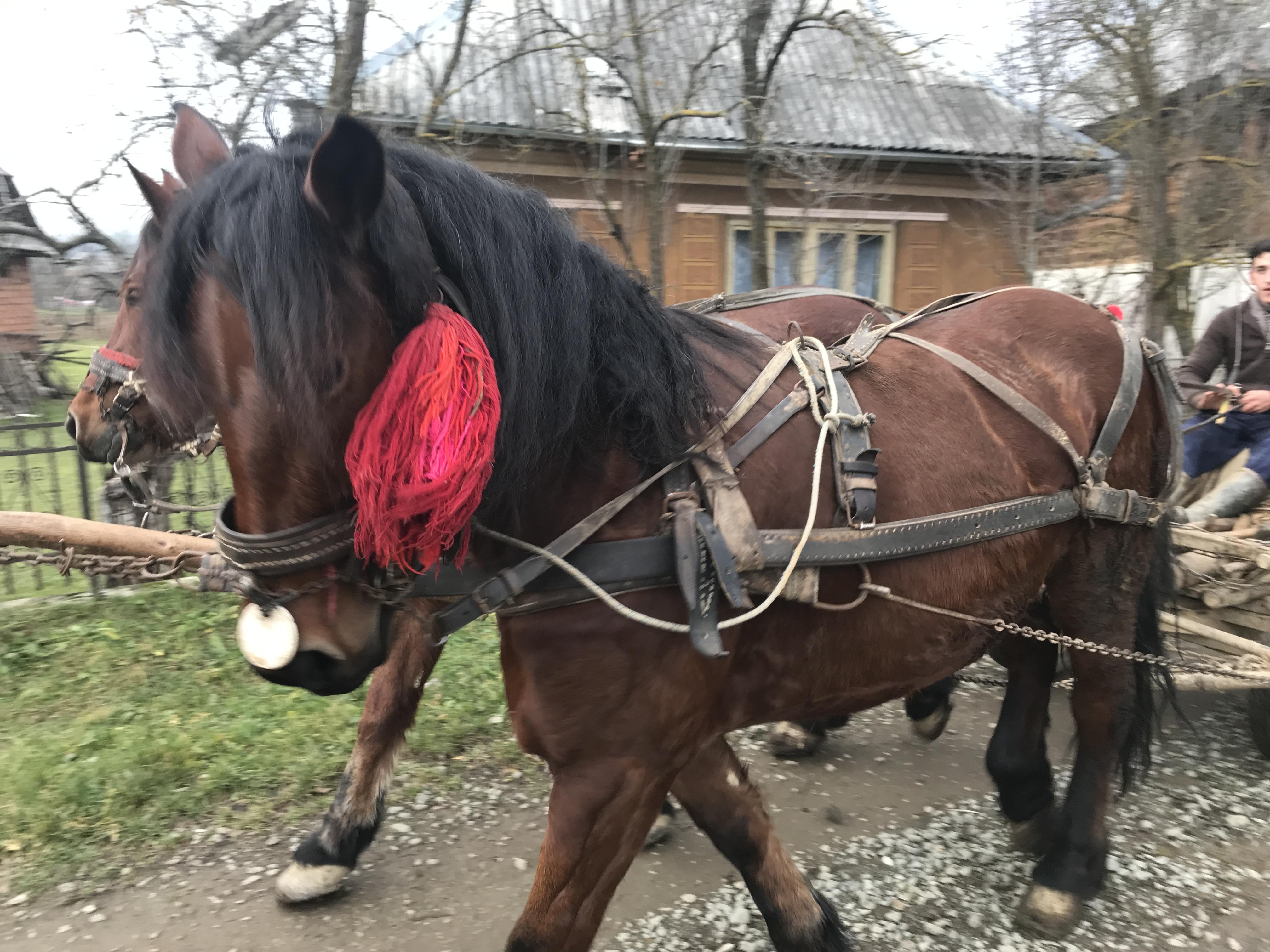 Horses in Maramures, Romania